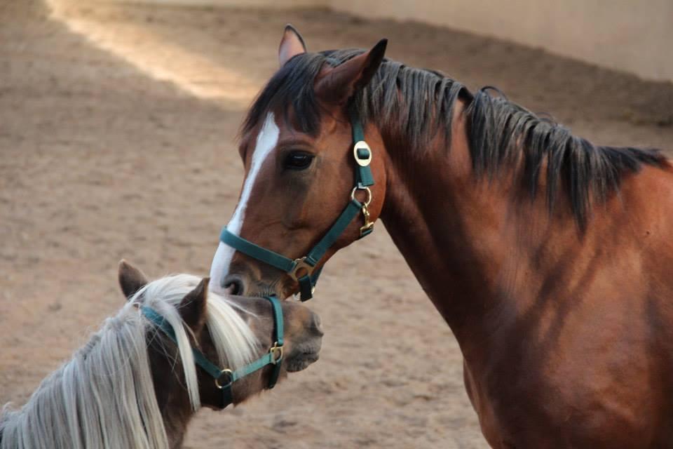 Mitarbeiterfortbildungen HR Pferde